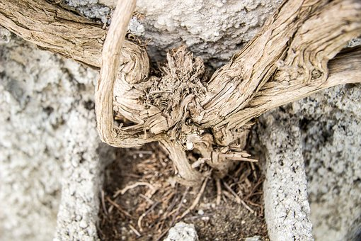 Roots, Old Roots, Wood, Root, Wall