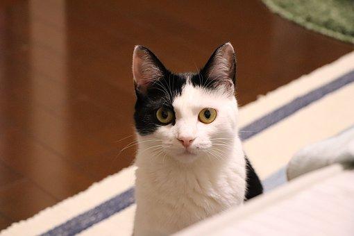 Cat, Animal, Cute, Creatures, Pet