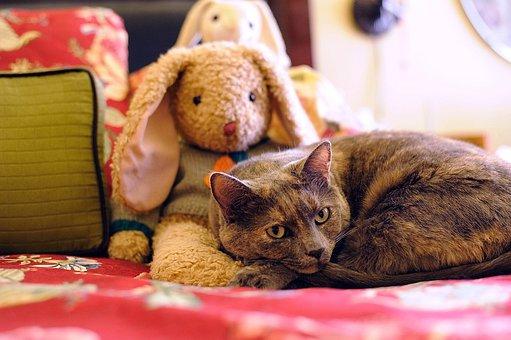 Cat, Animal, Pet, Feline, Toy, Cute, Kitty, Housecat
