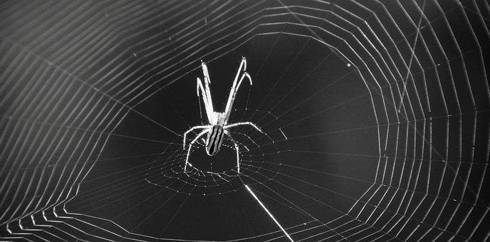 Macro, Insect, Arachnid, Black And White, Armenia