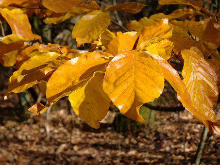 Leaves, Fall, Autumn, Nature, Tree, Yellow, Forest