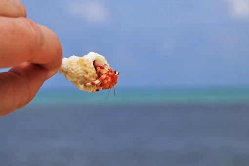 Crabs, Beach, Ocean, Maldives, Holidays, Bank, Water