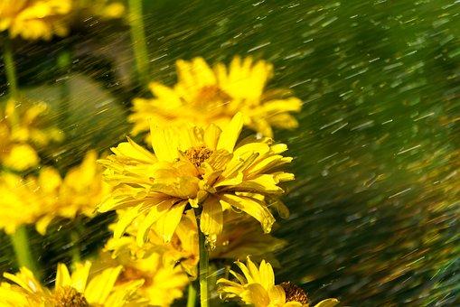 Sun Hat, Rain, Forward, Storm, Drip, Wet, Bloom, Yellow