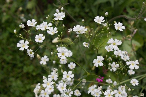 White, Flower, Floral, Botanical, Macro, Nature, Garden