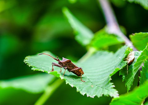 Beetle, Bug, Insect, Nature, Animal, Close Up, Macro