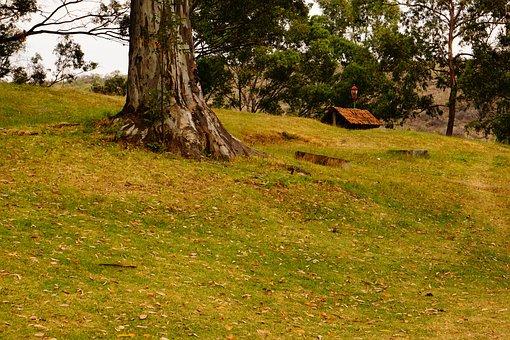 Forest, Cabin, Landscape