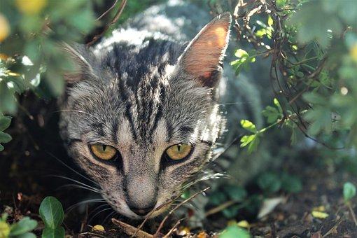 Cat, Grey, Mackerel, Curious, Hide, Domestic Cat, Pet