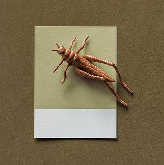 Abstract, Background, Brown, Bug, Card, Colorful
