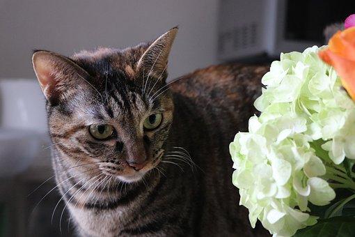 Cat, Pet, Animal, Cute, Creatures, Flowers, Hydrangea