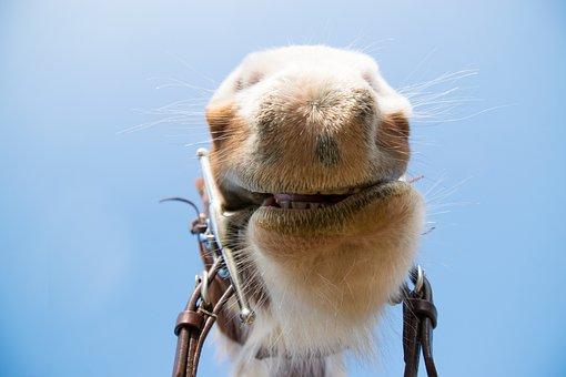 Nature, Cute, Portrait, Animal, Fur, Mammal, Horse