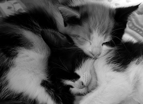 Cat, Sleep, Animal, Cute, Kitten, Domestic Cat, Sweet