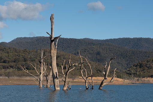 Lake, Dead Trees, Landscape, Nature, Dead, Trees