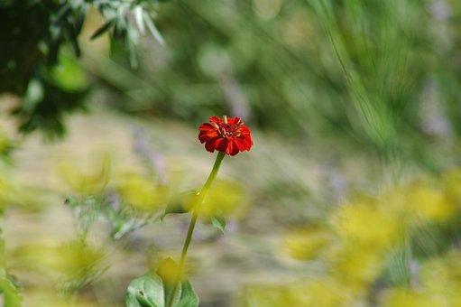 Nature, Flower, Flora, Summer, Leaf, Outdoors, Grass