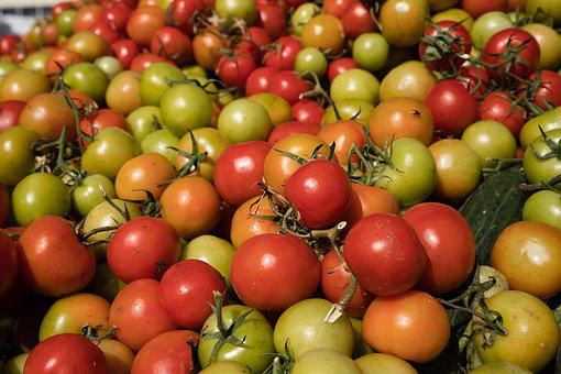 Tomatoes, Tomato, Harvest, Food, Healthy, Fresh, Fruit
