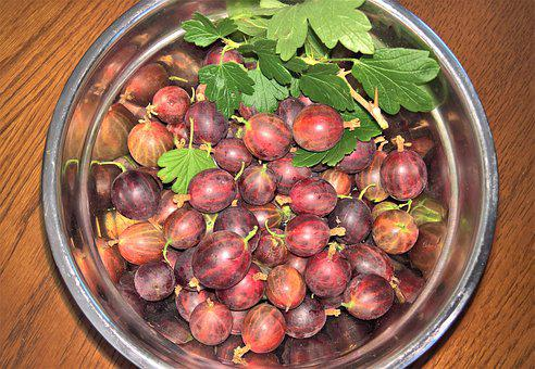Gooseberries, Fruits, Fruit, Shell, Harvested, Bush