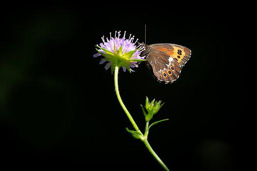 Butterfly, Flower, Animal, Insect, Flight Insect