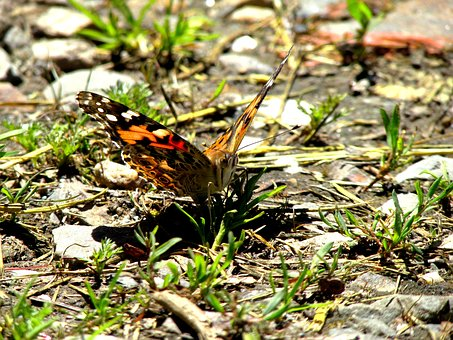 Butterfly, Close, Closeup, Insect, Nature, Wing