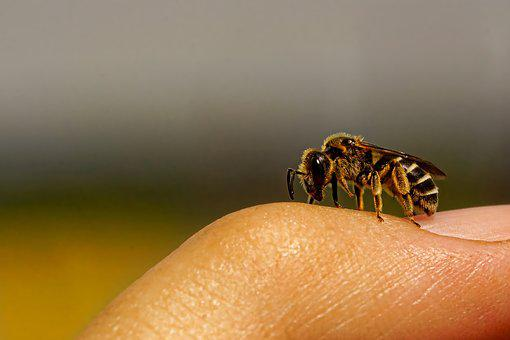 Nature, Insect, Wild Bee, Finger, Macro, Wing