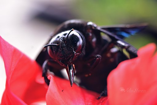 Macro, Insects, Eye, Close Up, Flower Petal, Red, Black