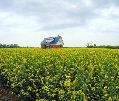 Canola, Red House, Canola Oil, Japan, Hokkaido