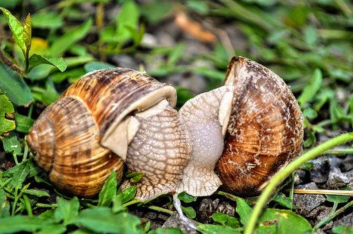 Snail, Nature, Macro, Garden, Snails, Mäkkýš, Pet