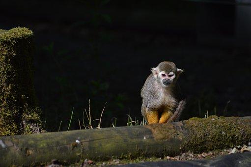 Monkey, Primate, Zoo