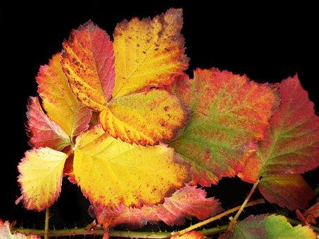 Autumn, Fall, Leaves, Nature, Garden