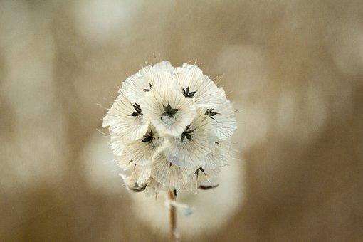 Wild Flower, Flower, Afternoon, Field, Nature, Flowers