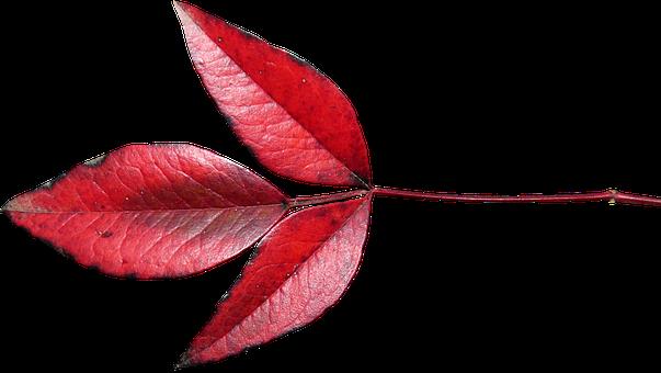 Leaf, Plant, Nature, Autumn, Fall, Garden