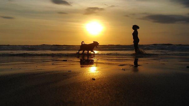 Beach, Dog, Pet, Nature, Ocean, Fun, Outdoor, Vacation