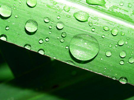 Leaf, Nature, Water, Green, Freshness, Dew, Plant