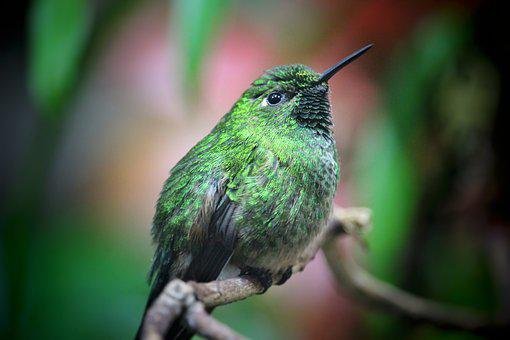 Trochilidae, Hummingbird, Green, Plumage, Sitting, Bill