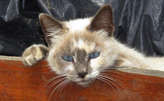 Nature, Feline, Domestic Cat, Rest, Armenia
