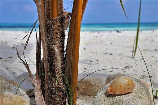 Maldives, Sand, Ocean, The Sun, The Tropical, Palma