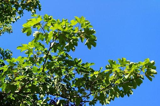 Sky, Summer, Leaves, Branch, Back Light, Nature