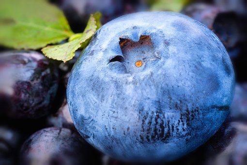 Blueberry, Nature, Leaf, Plant, Summer, Fruit, Ripe
