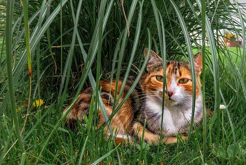 Cat, Animals, Pet, Mackerel, Tiger, Eyes, Charming