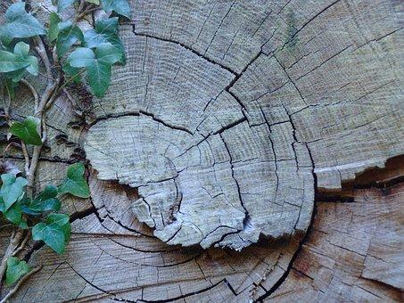 Tree, Ivy, Green, Brown, Climber, Leaf, Strain