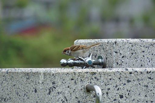 Animal, Water Service, Bird, Wild Birds, Sparrow