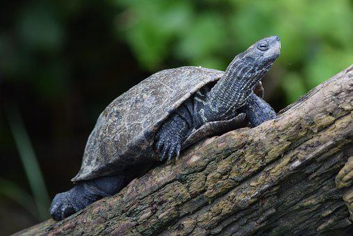 Turtle, Nature, Animal, Branch