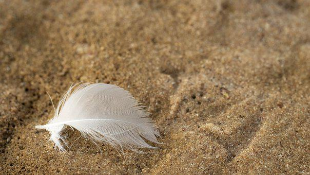Pen, Bird, A Feather, Plumage, Beach, Sand, White