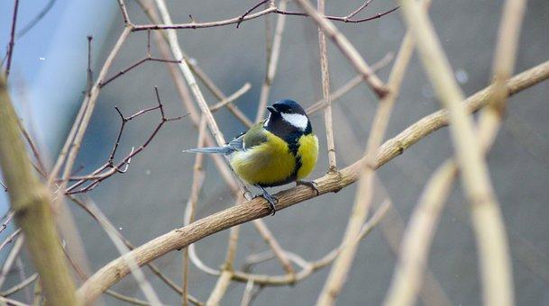 Bird, Winter, Nature, Autumn, Tree
