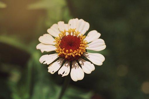 White Flower, Flower, Blossom, Bloom, White, Flora