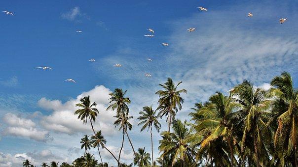 Palm Trees, Exotic, Blue Sky, Palm, Leaf, Beach