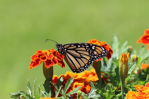 Nature, Butterfly, Flower, Insect, Bright