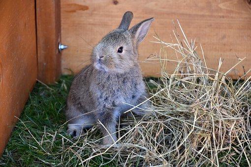 Bunny, Pet, Rabbit, Animal