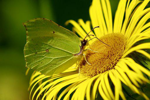 Yellow, Flower, Butterfly, Yellow Butterfly, Summer