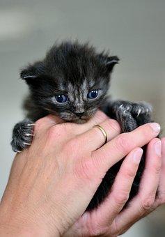 Cat, Young Animal, Kitten, Domestic Cat, Pet, Cute
