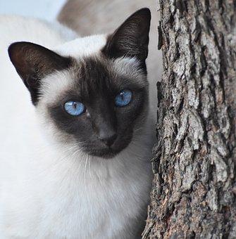 Cat, Cute, Portrait, Mammal, Eye, Pet, Looking