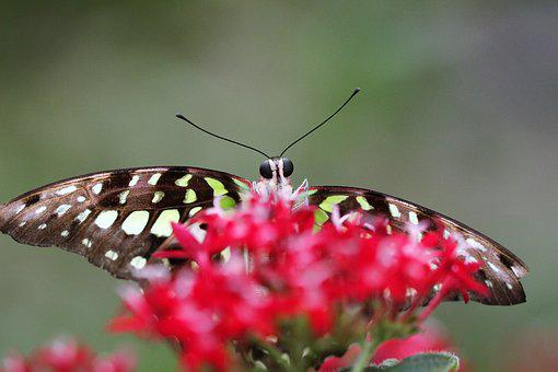 Butterfly, Flower, Nature, Papiliorama Kerzers